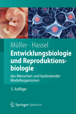 Entwicklungsbiologie und Reproduktionsbiologie des Menschen und bedeutender Modellorganismen von Hassel,  Monika, Müller,  Werner A.
