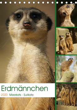 Erdmännchen-Meerkats-Surikate (Tischkalender 2020 DIN A5 hoch) von Hebgen,  Peter