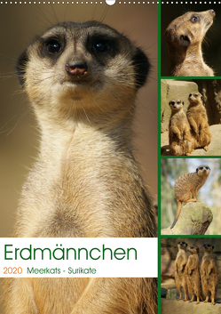 Erdmännchen-Meerkats-Surikate (Wandkalender 2020 DIN A2 hoch) von Hebgen,  Peter