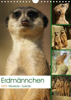 Erdmännchen-Meerkats-Surikate (Wandkalender 2020 DIN A4 hoch) von Hebgen,  Peter