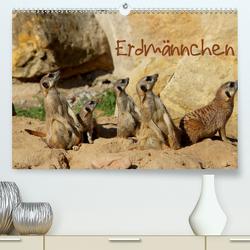 Erdmännchen (Premium, hochwertiger DIN A2 Wandkalender 2021, Kunstdruck in Hochglanz) von Hultsch,  Heike