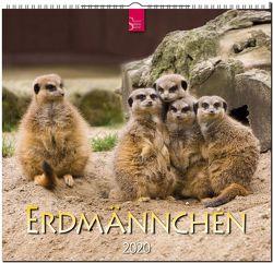 Erdmännchen von Redaktion Verlagshaus Würzburg,  Bildagentur