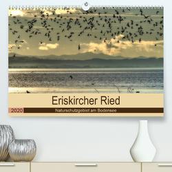 Eriskircher Ried – Naturschutzgebiet am Bodensee (Premium, hochwertiger DIN A2 Wandkalender 2020, Kunstdruck in Hochglanz) von Brinker,  Sabine