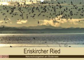Eriskircher Ried – Naturschutzgebiet am Bodensee (Wandkalender 2018 DIN A3 quer) von Brinker,  Sabine