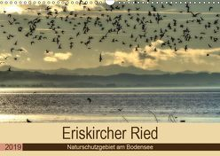 Eriskircher Ried – Naturschutzgebiet am Bodensee (Wandkalender 2019 DIN A3 quer) von Brinker,  Sabine