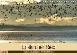 Eriskircher Ried – Naturschutzgebiet am Bodensee (Wandkalender 2019 DIN A4 quer) von Brinker,  Sabine