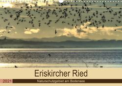 Eriskircher Ried – Naturschutzgebiet am Bodensee (Wandkalender 2021 DIN A3 quer) von Brinker,  Sabine