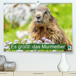 Es grüßt: das Murmeltier (Premium, hochwertiger DIN A2 Wandkalender 2021, Kunstdruck in Hochglanz) von CALVENDO