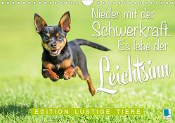 Es lebe der Leichtsinn: Edition lustige Tiere (Wandkalender 2020 DIN A4 quer) von CALVENDO
