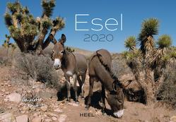 Esel 2020