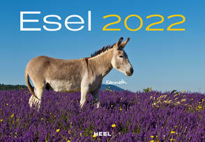 Esel 2022