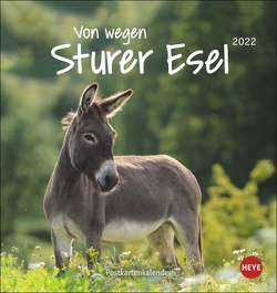 Esel Postkartenkalender 2022 von Heye