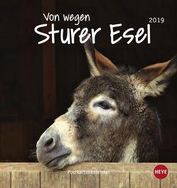 Esel Postkartenkalender – Von wegen sturer Esel – Kalender 2019 von Heye