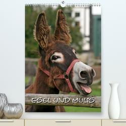 Esel und Mulis / CH-Version (Premium, hochwertiger DIN A2 Wandkalender 2021, Kunstdruck in Hochglanz) von - Antje Lindert Rottke + Martina Berg,  Pferdografen.de