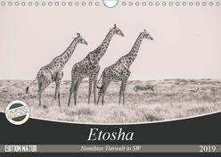 Etosha – Namibias Tierwelt in SW (Wandkalender 2019 DIN A4 quer) von Kohlem,  Arno