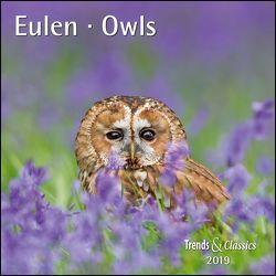 Eulen Owls 2019 – Broschürenkalender – Wandkalender – mit herausnehmbarem Poster – Format 30 x 30 cm von DUMONT Kalenderverlag