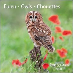 Eulen Owls 2020 – Broschürenkalender – Wandkalender – mit herausnehmbarem Poster – Format 30 x 30 cm von DUMONT Kalenderverlag