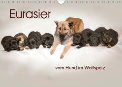 Eurasier, der Hund im Wolfspelz (Wandkalender 2019 DIN A4 quer) von Überall,  Peter