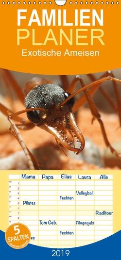 Exotische Ameisen – Familienplaner hoch (Wandkalender 2019 , 21 cm x 45 cm, hoch) von Störmer,  Roland