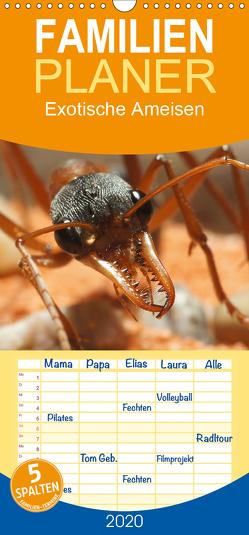 Exotische Ameisen – Familienplaner hoch (Wandkalender 2020 , 21 cm x 45 cm, hoch) von Störmer,  Roland