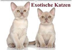 Exotische Katzen / Geburtstagskalender (Wandkalender immerwährend DIN A2 quer) von Stanzer,  Elisabeth