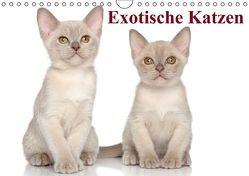 Exotische Katzen / Geburtstagskalender (Wandkalender immerwährend DIN A4 quer) von Stanzer,  Elisabeth