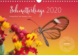 Exotische Schmetterlinge 2020 (Wandkalender 2020 DIN A4 quer) von Liesz,  Norbert