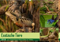 Exotische Tiere im Tropenhaus Klein Eden in Tettau (Wandkalender 2019 DIN A2 quer) von HeschFoto