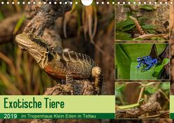 Exotische Tiere im Tropenhaus Klein Eden in Tettau (Wandkalender 2019 DIN A4 quer) von HeschFoto