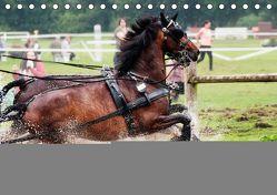 Fahrpferde in Aktion (Tischkalender 2019 DIN A5 quer) von Sixt,  Marion