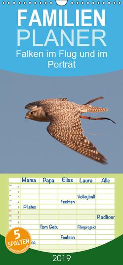 Falken im Flug und im Porträt – Familienplaner hoch (Wandkalender 2019 , 21 cm x 45 cm, hoch) von Gasteiger,  Karolina