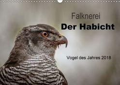Falknerei Der Habicht (Wandkalender 2018 DIN A3 quer) von Brandt,  Tanja