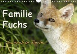 Familie Fuchs hautnah in Berlin (Wandkalender 2019 DIN A4 quer) von Brinker,  Sabine
