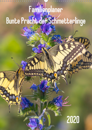 Familienplaner Bunte Pracht der Schmetterlinge (Wandkalender 2020 DIN A2 hoch) von Blickwinkel,  Dany´s