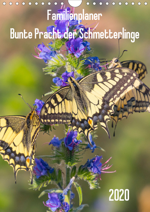Familienplaner Bunte Pracht der Schmetterlinge (Wandkalender 2020 DIN A4 hoch) von Blickwinkel,  Dany´s