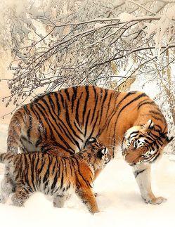 Fantasy Notizbuch 14: Tiger im Schnee von Sternenfeuer,  Samuriel