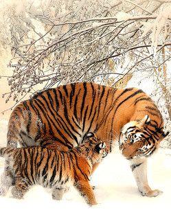 Fantasy Notizbuch: Tiger im Schnee – weiße Seiten mit Eckmotiv von Sternenfeuer,  Samuriel