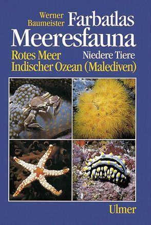 Farbatlas Meeresfauna. Rotes Meer, Indischer Ozean (Malediven) / Niedere Tiere von Baumeister,  Werner