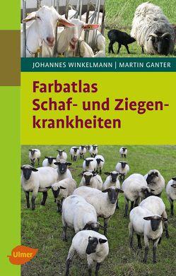 Farbatlas Schaf- und Ziegenkrankheiten von Ganter,  Martin, Winkelmann,  Johannes