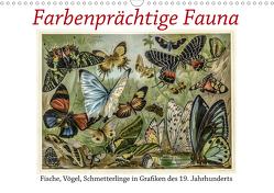 Farbenprächtige Fauna. Fische, Vögel, Schmetterlinge in Grafiken des 19 Jahrhunderts (Wandkalender 2021 DIN A3 quer) von Galle,  Jost