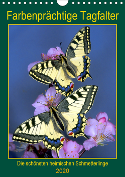 Farbenprächtige Tagfalter (Wandkalender 2020 DIN A4 hoch) von Reupert,  Lothar