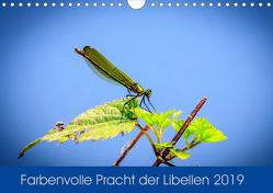 Farbenvolle Pracht der Libellen (Wandkalender 2019 DIN A4 quer) von Blickwinkel,  Dany´s