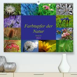 Farbtupfer der Natur – Blütenpracht (Premium, hochwertiger DIN A2 Wandkalender 2021, Kunstdruck in Hochglanz) von Michel,  Susan