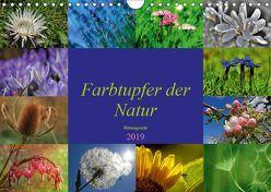 Farbtupfer der Natur – Blütenpracht (Wandkalender 2019 DIN A4 quer) von Michel,  Susan
