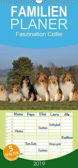 Faszination Collie 2019 – Familienplaner hoch (Wandkalender 2019 , 21 cm x 45 cm, hoch) von Starick,  Sigrid
