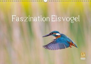 Faszination Eisvogel (Wandkalender 2018 DIN A3 quer) von Martin,  Wilfried