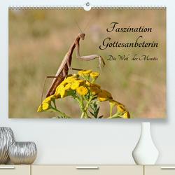 Faszination Gottesanbeterin – Die Welt der Mantis (Premium, hochwertiger DIN A2 Wandkalender 2020, Kunstdruck in Hochglanz) von juehust