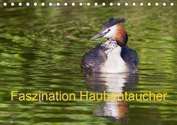 Faszination Haubentaucher (Tischkalender 2019 DIN A5 quer) von Martin,  Wilfried