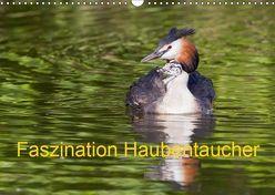 Faszination Haubentaucher (Wandkalender 2019 DIN A3 quer) von Martin,  Wilfried