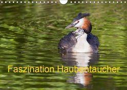 Faszination Haubentaucher (Wandkalender 2019 DIN A4 quer) von Martin,  Wilfried